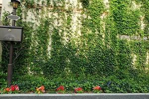 春は壁一面にジャスミンが香ります。